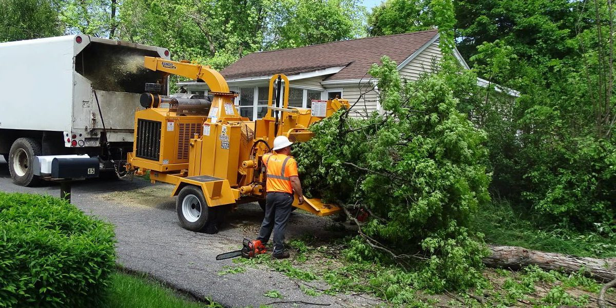 tree maintenance near me