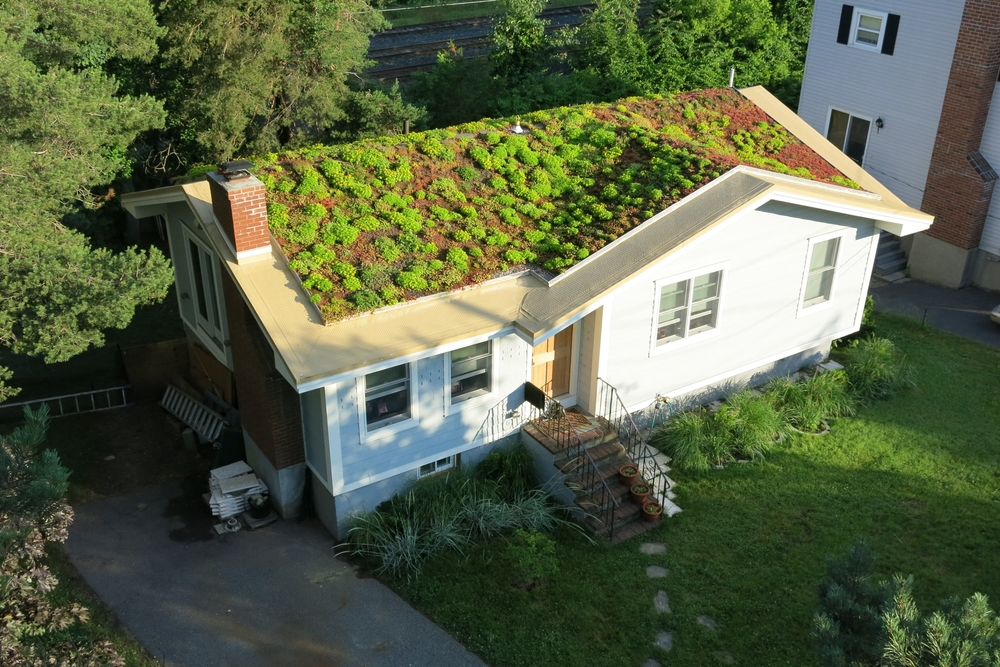 green-roof-install