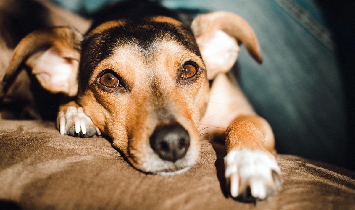 what causes constipation in dogs