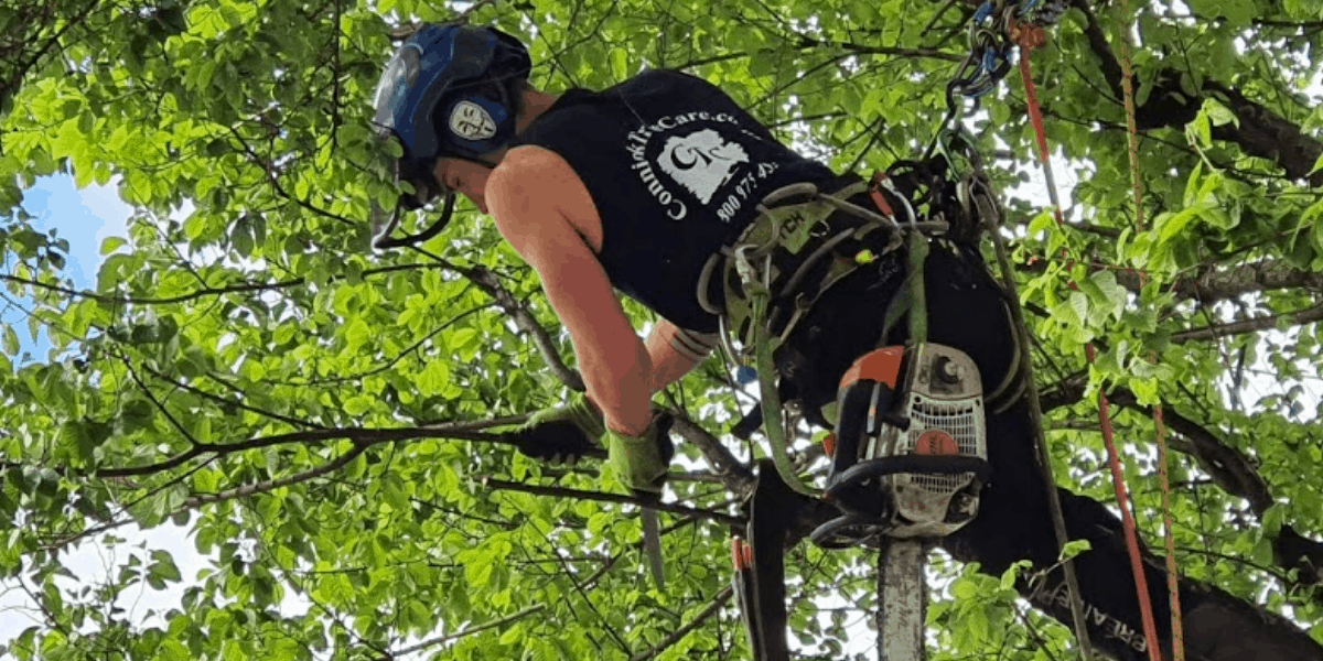 how to become a certified arborist in georgia